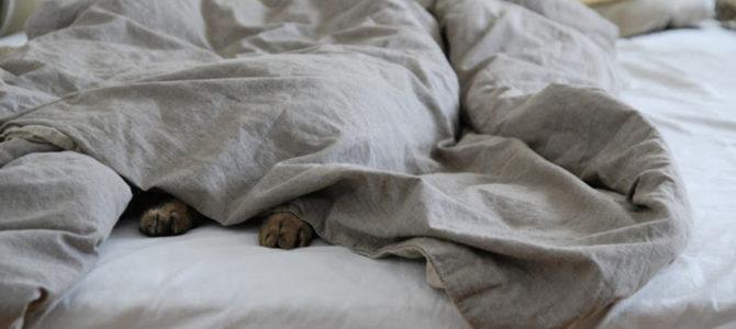 Kołdra – jak ją wybrać do naszego łóżka?